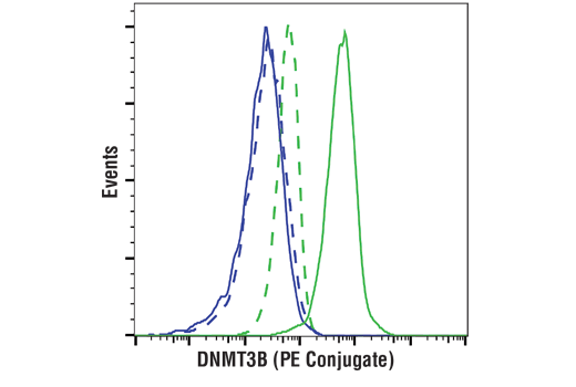 Flow cytometric analysis of HCT 116 cells (blue) and NCCIT cells (green) using DNMT3B (D7O7O) Rabbit mAb (PE Conjugate) (solid lines) or a Rabbit (DA1E) mAb IgG XP<sup>®</sup> Isotype Control (PE Conjugate) #5742 (dashed lines).