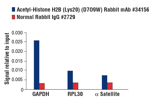 Chromatin Immunoprecipitation Image 1: Acetyl-Histone H2B (Lys20) (D7O9W) Rabbit mAb