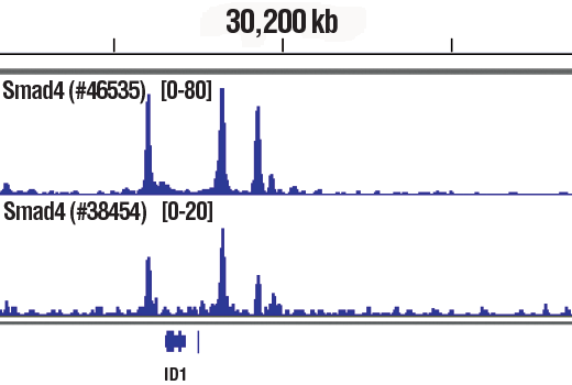 Chromatin immunoprecipitations were performed with cross-linked chromatin from HaCaT cells treated with TGF-β1 #8915 (7 ng/mL, 1 hr) and either Smad4 (D3R4N) XP<sup>®</sup> Rabbit mAb (upper) or Smad4 (D3M6U) Rabbit mAb #38454 (lower), using SimpleChIP<sup>®</sup> Plus Enzymatic Chromatin IP Kit (Magnetic Beads) #9005. DNA Libraries were prepared using SimpleChIP<sup>®</sup> ChIP-seq DNA Library Prep Kit for Illumina<sup>®</sup> #56795. The figure shows binding across ID1, a known target gene of Smad4 (see additional figure containing ChIP-qPCR data). For additional ChIP-seq tracks, please download the product data sheet.