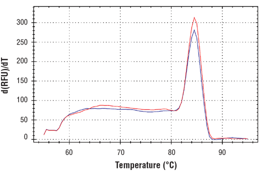 PCR product melting curves were obtained for real-time PCR reactions performed using SimpleChIP<sup>®</sup> Human TGFBR2 Promoter Primers. Data is shown for both duplicate PCR reactions using 20 ng of total DNA. The melt curve consists of 80 melt cycles, starting at 55°C with increments of 0.5°C per cycle. Each peak is formed from the degradation of a single PCR product.