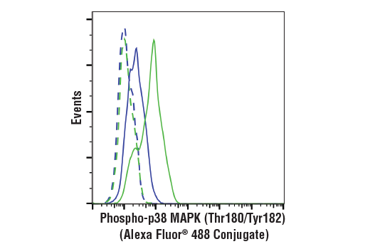 Flow cytometric analysis of C2C12 cells untreated (blue) or anisomycin-treated (25 ug/mL, 30 minutes) (green), using Phospho-p38 MAPK (Thr180/Tyr182) (3D7) Rabbit mAb (Alexa Fluor<sup>®</sup> 488 Conjugate) (solid lines) or a concentration-matched Rabbit (DA1E) mAb IgG XP<sup>®</sup> Isotype Control (Alexa Fluor<sup>®</sup> 488 Conjugate) #2975 (dashed lines).