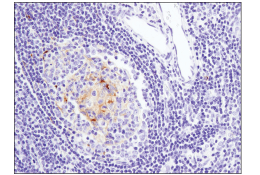 Image 58: Human T Cell Co-inhibitory and Co-stimulatory Receptor IHC Antibody Sampler Kit