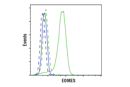Monoclonal Antibody - EOMES (D8D1R) Rabbit mAb, UniProt ID O95936, Entrez ID 8320 #81493, Flow Cytometry