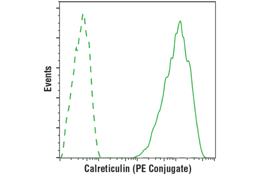 Flow cytometric analysis of SH-SY5Y cells using using Calreticulin (D3E6) XP® Rabbit mAb (PE Conjugate) (solid line) or concentration-matched Rabbit (DA1E) mAb IgG XP<sup>®</sup> Isotype Control (PE Conjugate) #5742 (dashed line).