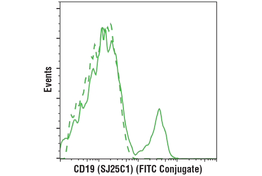 Flow cytometric analysis of live human peripheral blood mononuclear cells using CD19 (SJ25C1) Mouse mAb (FITC Conjugate) (solid line) compared to concentration-matched Mouse (MOPC-21) mAb IgG1 Isotype Control (FITC Conjugate) #97146 (dashed line).