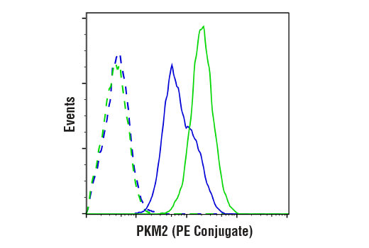 Flow cytometric analysis of 293T cells, untransfected (green) or transfected with PKM2 siRNA (blue), using PKM2 (D78A4) XP<sup>®</sup> Rabbit mAb (PE Conjugate) (solid line) compared to a concentration-matched Rabbit (DA1E) mAb IgG XP<sup>®</sup> Isotype Control (PE Conjugate) #5742 (dashed line).