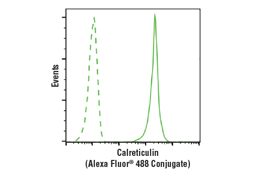 Flow cytometric analysis of Jurkat cells using Calreticulin (D3E6) XP<sup>®</sup> Rabbit mAb (Alexa Fluor<sup>®</sup> 488 Conjugate) (solid line) compared to concentration-matched Rabbit (DA1E) mAb IgG XP<sup>®</sup> Isotype Control (Alexa Fluor<sup>®</sup> 488 Conjugate) #2975 (dashed line).