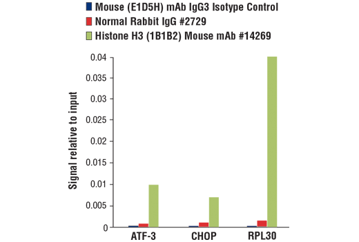 Chromatin immunoprecipitations were performed with cross-linked chromatin from 4 x 10<sup>6 </sup>MEF cells treated with tunicamycin (2 μg/ml, 10 hr) and either Mouse (E1D5H) mAb IgG3 Isotype Control, Normal Rabbit IgG #2729, or Histone H3 (1B1B2) Mouse mAb #14269 using SimpleChIP<sup>®</sup> Plus Enzymatic Chromatin IP Kit (Magnetic Beads) #9005. The enriched DNA was quantified by real-time PCR using SimpleChIP<sup>®</sup> Mouse ATF-3 Intron 1 Primers #13059, mouse CHOP promoter primers, and SimpleChIP<sup>®</sup> Mouse RPL30 Intron 2 Primers #7015. The amount of immunoprecipitated DNA in each sample is represented as signal relative to the total amount of input chromatin, which is equivalent to one.