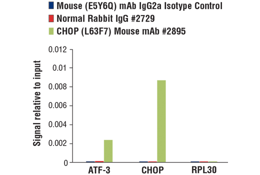 Chromatin immunoprecipitations were performed with cross-linked chromatin from 4 x 10<sup>6 </sup>mouse embryonic fibroblasts treated with tunicamycin (2ug/ml, 10hr) and either Mouse (E5Y6Q) mAb IgG2a Isotype Control, Normal Rabbit IgG #2729, or CHOP (L63F7) Mouse mAb #2895 using SimpleChIP<sup>®</sup> Plus Enzymatic Chromatin IP Kit (Magnetic Beads) #9005. The enriched DNA was quantified by real-time PCR using SimpleChIP<sup>®</sup> Mouse ATF-3 Intron 1 Primers #13059, mouse CHOP promoter primers, and SimpleChIP<sup>®</sup> Mouse RPL30 Intron 2 Primers #7015. The amount of immunoprecipitated DNA in each sample is represented as signal relative to the total amount of input chromatin, which is equivalent to one.