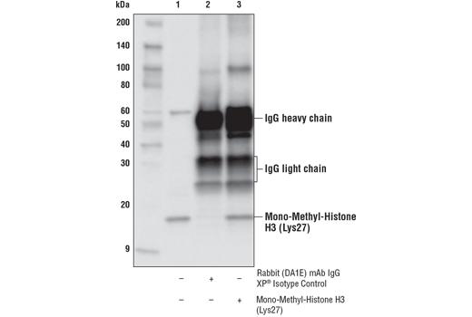CST - Methyl-Histone H3 (Lys27) Antibody Sampler Kit