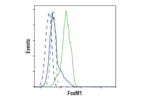Flow cytometric analysis of HeLa cells, untreated (blue) or treated with Aphidicolin (2 μM, 24 hr; green), using FoxM1 (D3F2B) Rabbit mAb (Flow Formulated) (solid lines) or concentration-matched Rabbit (DA1E) mAb IgG XP<sup>®</sup> Isotype control #3900 (dashed lines). Anti-rabbit IgG (H+L), F(ab')<sub>2</sub> Fragment (Alexa Fluor<sup>®</sup> 488 Conjugate) #4412 was used as a secondary antibody.