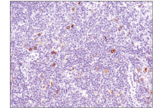 Image 59: Human T Cell Co-inhibitory and Co-stimulatory Receptor IHC Antibody Sampler Kit