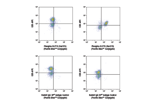 Monoclonal Antibody - Phospho-SLP-76 (Ser376) (D7S1K) XP® Rabbit mAb (Pacific Blue™ Conjugate), UniProt ID Q13094, Entrez ID 3937 #83768, Flow Cytometry