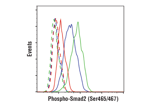 Flow cytometric analysis of serum-starved HT-1080 cells, untreated (blue), treated with Human Transforming Growth Factor β3 (hTGF-β3) #8425 (100 ng/mL, 30 min; green) or pretreated with SB43152 (10 ug/mL, 30 min) and treated with hTGF-β3 (100 ng/mL, 30 min; red), using Phospho-Smad2 (Ser465/467) (E8F3R) Rabbit mAb (solid lines) or concentration-matched Rabbit (DA1E) mAb IgG XP<sup>®</sup> Isotype Control #3900 (dashed lines). Anti-rabbit IgG (H+L), F(ab')<sub>2</sub> Fragment (Alexa Fluor<sup>®</sup> 488 Conjugate) #4412 was used as a secondary antibody.