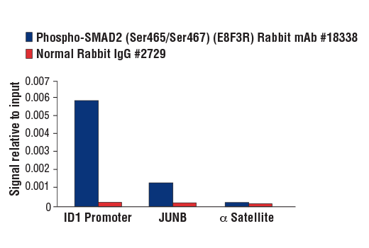 Chromatin immunoprecipitations were performed with cross-linked chromatin from HaCaT cells treated with Human Growth Factor β1 #8915 (7 ng/ml, 1 hr) and either Phospho-SMAD2 (Ser465/Ser467) (E8F3R) Rabbit mAb or Normal Rabbit IgG #2729 using SimpleChIP<sup>®</sup> Plus Enzymatic Chromatin IP Kit (Magnetic Beads) #9005. The enriched DNA was quantified by real-time PCR using SimpleChIP<sup>®</sup> Human ID1 Promoter Primers #5139, Human JunB Promoter Primers, and SimpleChIP<sup>®</sup> Human α Satellite Repeat Primers #4486. The amount of immunoprecipitated DNA in each sample is represented as signal relative to the total amount of input chromatin, which is equivalent to one.