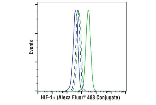 Flow cytometric analysis of U-2 OS cells, untreated (blue) or treated with DMOG (1 mM, 6 hr; green), using HIF-1α (D1S7W) XP<sup>®</sup> Rabbit mAb (Alexa Fluor<sup>®</sup> 488 Conjugate) (solid lines) or concentration-matched Rabbit (DA1E) mAb IgG XP<sup>®</sup> Isotype Control (Alexa Fluor<sup>®</sup> 488 Conjugate) #2975 (dashed lines).