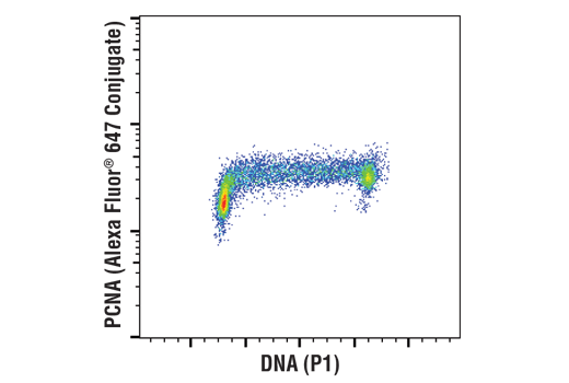 Flow cytometric analysis of Jurkat cells using PCNA (D3H8P) XP<sup>®</sup> Rabbit mAb (Alexa Fluor<sup>®</sup> 647 Conjugate) and Propidium Iodide (PI)/RNase Staining Solution #4087 to measure DNA content.