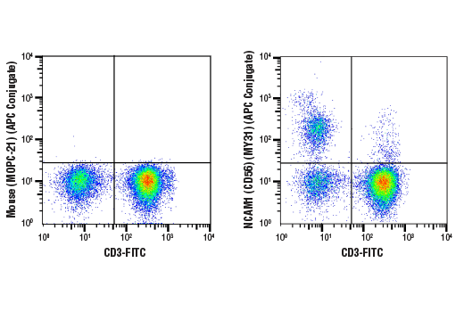 Monoclonal Antibody - NCAM1 (CD56) (MY31) Mouse mAb (APC Conjugate), UniProt ID P13591, Entrez ID 4684 #51997, Cd Markers
