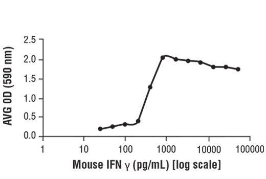 The bioactivity of recombinant mIFN-γ was determined in a virus protection assay. L-929 cells were pretreated with increasing concentrations of mIFN-γ (started at 25 pg/ml). Cells were then inoculated with encephalomyocarditis virus (EMCV). The OD<sub>590</sub> was determined for the surviving cells.