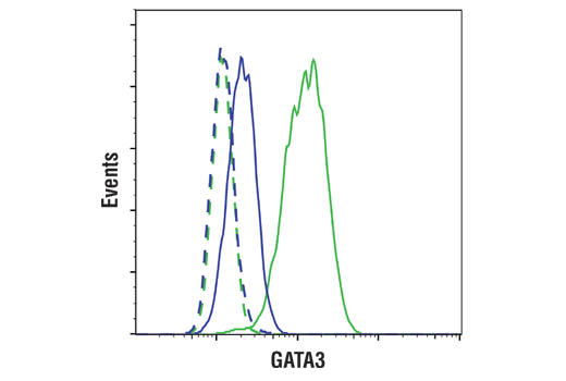 Flow cytometric analysis of THP-1 cells (blue) and MCF7 cells (green) using GATA3 (E2N1Y) Mouse mAb (solid lines) or concentration-matched Mouse (G3A1) mAb IgG Isotype control #5415 (dashed lines). Anti-mouse IgG (H+L), F(ab')<sub>2</sub> Fragment (Alexa Fluor<sup>®</sup> 488 Conjugate) #4408 was used as a secondary antibody.