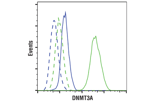 Flow cytometric analysis of PC-3 cells (blue) and NCCIT cells (green) using DNMT3A (D2H4B) Rabbit mAb (solid lines) or a concentration-matched Rabbit (DA1E) mAb IgG XP<sup>®</sup> Isotype Control #3900 (dashed lines). Anti-rabbit IgG (H+L), F(ab')<sub>2</sub> Fragment (Alexa Fluor<sup>®</sup> 488 Conjugate) #4412 was used as a secondary antibody.