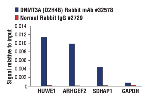 Chromatin immunoprecipitations were performed with cross-linked chromatin from NCCIT cells and either DNMT3A (D2H4B) Rabbit mAb or Normal Rabbit IgG #2729 using SimpleChIP® Plus Enzymatic Chromatin IP Kit (Magnetic Beads) #9005. The enriched DNA was quantified by real-time PCR using SimpleChIP® Human HUWE1 Intron 26 Control Primers #33770, human ARHGEF2 intron 13 primers, human SDHAP1 intron 10 primers, and SimpleChIP® Human GAPDH Exon 1 Primers #5516. The amount of immunoprecipitated DNA in each sample is represented as signal relative to the total amount of input chromatin, which is equivalent to one.
