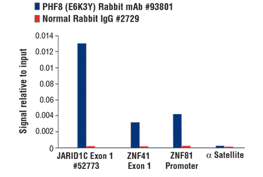 Chromatin immunoprecipitations were performed with cross-linked chromatin from SH-SY5Y cells and either PHF8 (E6K3Y) Rabbit mAb or Normal Rabbit IgG #2729 using SimpleChIP<sup>®</sup> Plus Enzymatic Chromatin IP Kit (Magnetic Beads) #9005. The enriched DNA was quantified by real-time PCR using SimpleChIP<sup>®</sup> Human JARID1C Exon 1 Primers #52773, human ZNF41 exon 1 Primers, human ZNF81 promoter primers, and SimpleChIP<sup>®</sup> Human α Satellite Repeat Primers #4486. The amount of immunoprecipitated DNA in each sample is represented as signal relative to the total amount of input chromatin, which is equivalent to one.