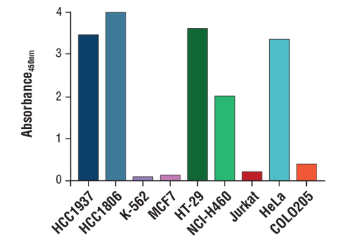 Figure 2. EGF Receptor protein is expressed in a variety of human cell lines but absent in others, as detected by using the FastScan™ Total EGF Receptor ELISA Kit #80869. The absorbance readings at 450 nm are shown.