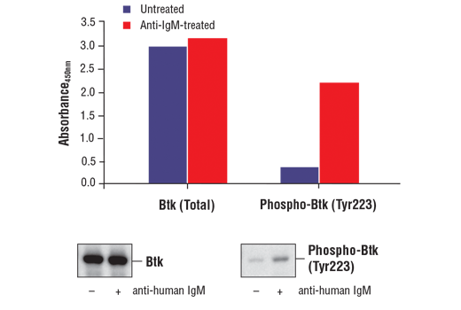 ELISA Kit Regulation of b Cell Cytokine Production