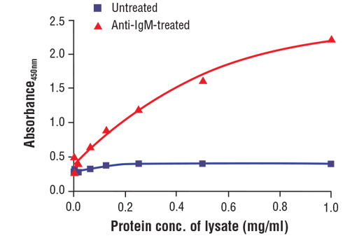 Figure 2. The relationship between the protein concentration of lysates from untreated and anti-human IgM-treated Ramos cells and the absorbance at 450 nm as detected by the PathScan<sup>®</sup> Phospho-Btk (tyr223) Sandwich ELISA Kit is shown. Starved Ramos cells (1.0 x10<sup>6</sup> cells/per ml) were treated with 12 ug/ml of anti-human IgM for 10 min. at 37ºC and then harvested and lysed.