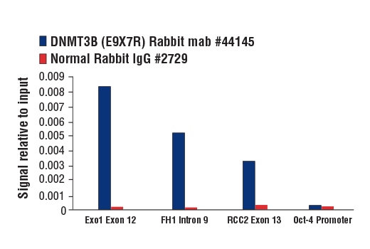 Chromatin immunoprecipitations were performed with cross-linked chromatin from mES cells and either DNMT3B (E9X7R) Rabbit mAb (Mouse Specific) or Normal Rabbit IgG #2729 using SimpleChIP<sup>®</sup> Plus Enzymatic Chromatin IP Kit (Magnetic Beads) #9005. The enriched DNA was quantified by real-time PCR using SimpleChIP<sup>®</sup> Mouse Exo1 Exon 12 Primers #49170, mouse FH1 intron 9 primers, mouse RCC2 exon 3 primers and SimpleChIP<sup>®</sup> Mouse Oct-4 Promoter Primers #4653. The amount of immunoprecipitated DNA in each sample is represented as signal relative to the total amount of input chromatin, which is equivalent to one.
