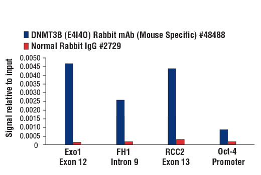 Chromatin immunoprecipitations were performed with cross-linked chromatin from mES cells and either DNMT3B (E4I4O) Rabbit mAb (Mouse Specific) or Normal Rabbit IgG #2729 using SimpleChIP<sup>®</sup> Plus Enzymatic Chromatin IP Kit (Magnetic Beads) #9005. The enriched DNA was quantified by real-time PCR using SimpleChIP<sup>®</sup> Mouse Exo1 Exon 12 Primers #49170, mouse FH1 intron 9 primers, mouse RCC2 exon 3 primers and SimpleChIP<sup>®</sup> Mouse Oct-4 Promoter Primers #4653. The amount of immunoprecipitated DNA in each sample is represented as signal relative to the total amount of input chromatin, which is equivalent to one.