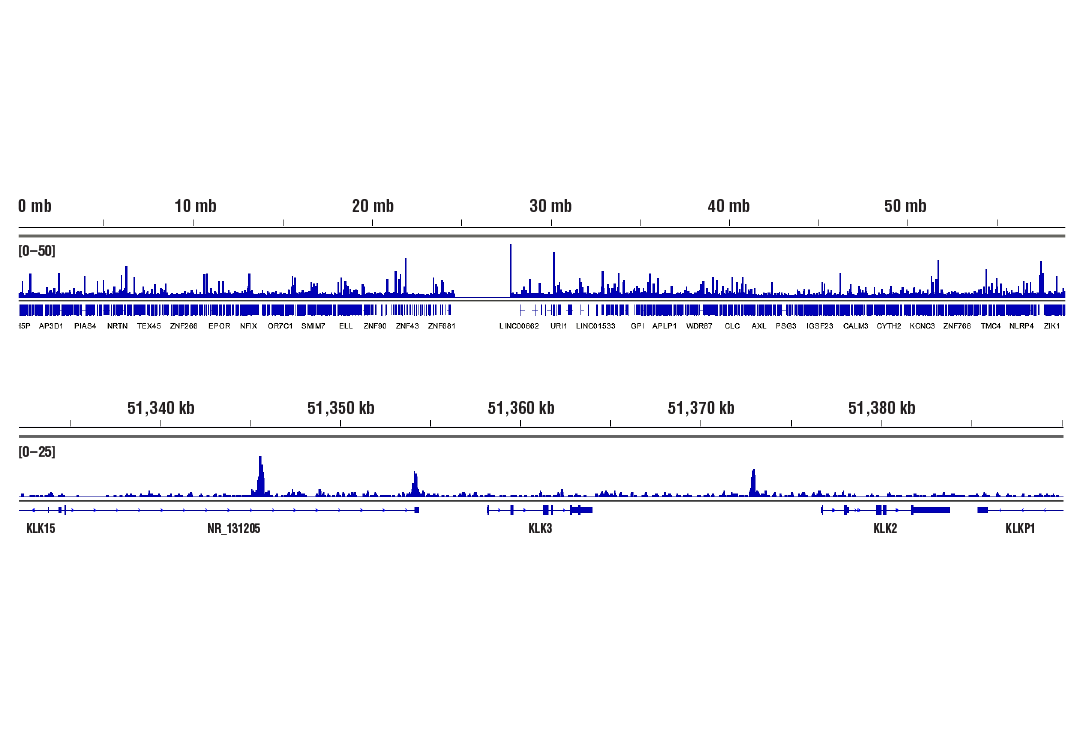 Chromatin Immunoprecipitation Image 2: FoxA1/HNF3α (E7E8W) Rabbit mAb