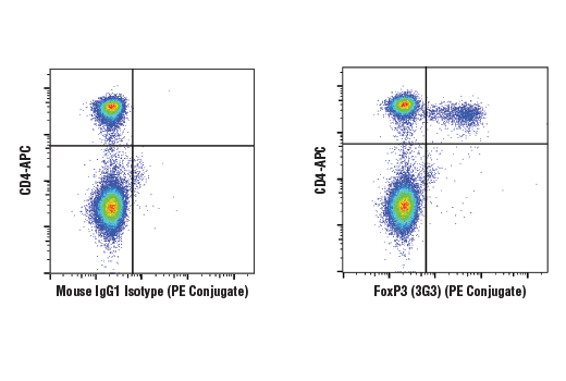 Flow Cytometry Image 1: FoxP3 (3G3) Mouse mAb (PE Conjugate)