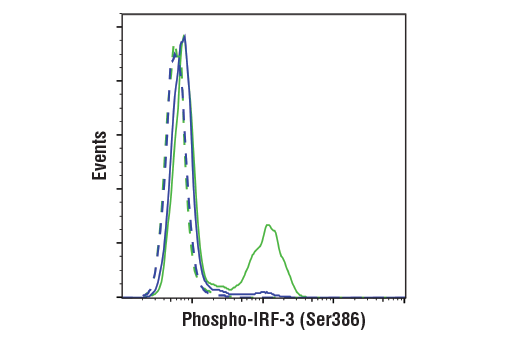 Flow cytometric analysis of THP-1 cells differentiated with TPA #4174 (80 nM, 24 hr), and then untransfected (blue) or transfected with poly(dA:dT) (5 ug/mL, 3 hr; green), using Phospho-IRF-3 (Ser 386) (E7J8G) XP<sup>®</sup> Rabbit mAb (solid lines) or concentration-matched Rabbit (DA1E) mAb IgG XP<sup>®</sup> Isotype Control #3900 (dashed lines). Anti-rabbit IgG (H+L), F(ab')<sub>2</sub> Fragment (Alexa Fluor<sup>®</sup> 488 Conjugate) #4412 was used as a secondary antibody.