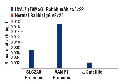 Chromatin immunoprecipitations were performed with cross-linked chromatin from A549 cells and either H2A.Z (E9M5G) Rabbit mAb or Normal Rabbit IgG #2729 using SimpleChIP<sup>®</sup> Plus Enzymatic Chromatin IP Kit (Magnetic Beads) #9005. The enriched DNA was quantified by real-time PCR using human SLC2A8 promoter primers, SimpleChIP<sup>®</sup> Human VAMP1 Promoter Primers #25921, and SimpleChIP<sup>®</sup> Human α Satellite Repeat Primers #4486. The amount of immunoprecipitated DNA in each sample is represented as signal relative to the total amount of input chromatin, which is equivalent to one.