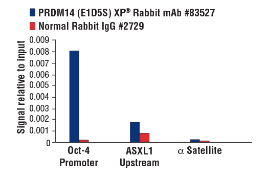 Chromatin immunoprecipitations were performed with cross-linked chromatin from NCCIT cells and either PRDM14 (E1D5S) XP<sup>®</sup> Rabbit mAb or Normal Rabbit IgG #2729 using SimpleChIP<sup>®</sup> Plus Enzymatic Chromatin IP Kit (Magnetic Beads) #9005. The enriched DNA was quantified by real-time PCR using SimpleChIP<sup>®</sup> Human Oct-4 Promoter Primers #4641, human ASXL1 upstream primers, and SimpleChIP<sup>®</sup> Human α Satellite Repeat Primers #4486. The amount of immunoprecipitated DNA in each sample is represented as signal relative to the total amount of input chromatin, which is equivalent to one.