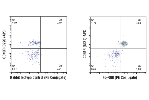 Flow cytometric analysis of mouse splenocytes using FcγRIIB (D8F9C) XP<sup>®</sup> Rabbit mAb (Mouse Specific) (PE Conjugate) (right) compared to concentration-matched Rabbit (DA1E) mAb IgG XP<sup>®</sup> Isotype Control (PE Conjugate) #5742 (left). Samples were co-stained with CD45R (B220)-APC to distinguish the B cell population.