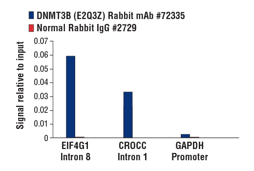 Chromatin immunoprecipitations were performed with cross-linked chromatin from NCCIT cells and either DNMT3B (E2Q3Z) Rabbit mAb #72335 or Normal Rabbit IgG #2729 using SimpleChIP<sup>®</sup> Plus Enzymatic Chromatin IP Kit (Magnetic Beads) #9005. The enriched DNA was quantified by real-time PCR using SimpleChIP<sup>®</sup> Human EIF4G1 Intron 8 Primers #29118, human CROCC intron 1 primers, and SimpleChIP<sup>®</sup> Human GAPDH Promoter Primers #4471. The amount of immunoprecipitated DNA in each sample is represented as signal relative to the total amount of input chromatin, which is equivalent to one.