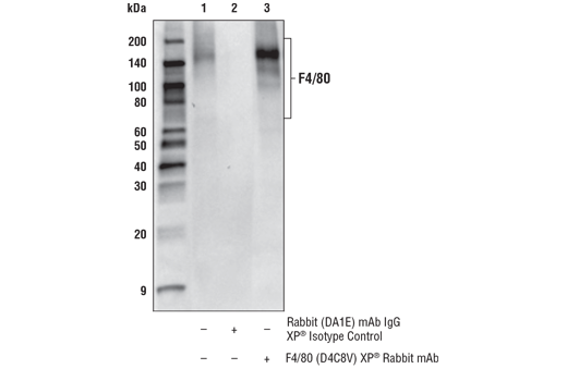 Image 29: Mouse Microglia Marker IF Antibody Sampler Kit