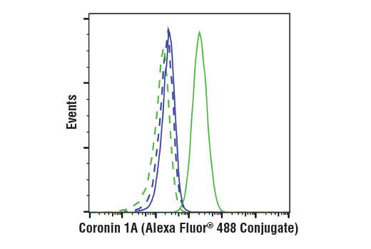 Flow cytometric analysis of MDA-MB-231 cells (blue) and Jurkat cells (green) using Coronin 1A (D6K5B) XP<sup>®</sup> Rabbit mAb (Alexa Fluor<sup>®</sup> 488 Conjugate) (solid lines) or a concentration-matched Rabbit (DA1E) mAb IgG XP<sup>®</sup> Isotype Control (Alexa Fluor<sup>®</sup> 488 Conjugate) #2975 (dashed lines).