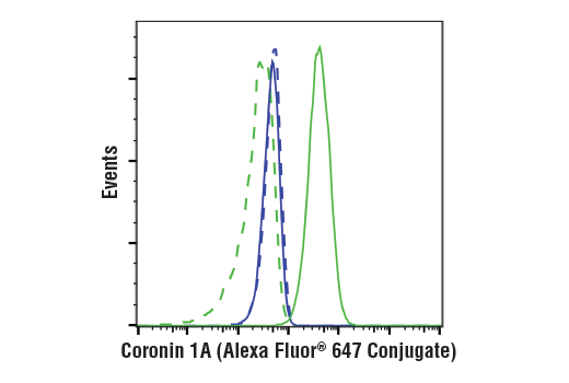 Flow cytometric analysis of MDA-MB-231 cells (blue) and Jurkat cells (green) using Coronin 1A (D6K5B) XP<sup>®</sup> Rabbit mAb (Alexa Fluor<sup>®</sup> 647 Conjugate) (solid lines) or a concentration-matched Rabbit (DA1E) mAb IgG XP<sup>®</sup> Isotype Control (Alexa Fluor<sup>®</sup> 647 Conjugate) #2985 (dashed lines).