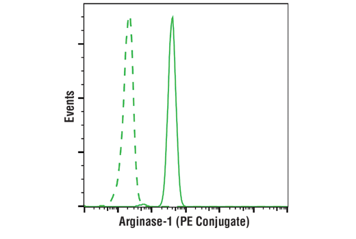 Flow cytometric analysis of human whole blood using Arginase-1 (D4E3M™) XP<sup>®</sup> Rabbit mAb (PE Conjugate) (solid line) compared to concentration-matched Rabbit (DA1E) mAb IgG XP<sup>®</sup> Isotype Control (PE Conjugate) #5742 (dashed line). Analysis was performed on cells in the granulocyte gate.