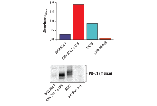 Figure 2. Detection of PD-L1 using FastScan™ Total PD-L1 ELISA Kit (Mouse Preferred) #41590 on a number of cell lines are shown in the upper figure. Mouse cell lines include RAW 264.7, untreated and treated with LPS, BA/F3, and KARPAS-299. KARPAS-299, a human cell line known to express PD-L1 shows no reactivity with FastScan™ Total PD-L1 ELISA Kit (Mouse Preferred) #41590. Corresponding western blot using a PD-L1 antibody (Mouse Preferred) is shown in the lower figure. KARPAS cell line source: Dr. Abraham Karpas at the University of Cambridge.