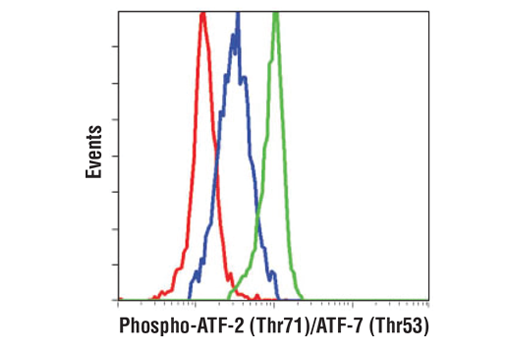 Flow cytometric analysis of THP-1 cells, untreated (blue) or Anisomycin treated (green), using Phospho-ATF-2 (Thr71)/ATF-7 (Thr53) (A8J7P) Rabbit mAb compared to a nonspecific negative control antibody (red).
