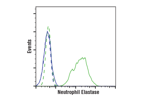 Flow cytometric analysis of Jurkat cells (blue) and U-937 cells (green) using Neutrophil Elastase (E9C9L) XP<sup>®</sup> Rabbit mAb (solid lines) or a concentration-matched Rabbit (DA1E) mAb IgG XP® Isotype Control #3900 (dashed lines). Anti-rabbit IgG (H+L), F(ab')<sub>2</sub> Fragment (Alexa Fluor<sup>®</sup> 488 Conjugate) #4412 was used as a secondary antibody.