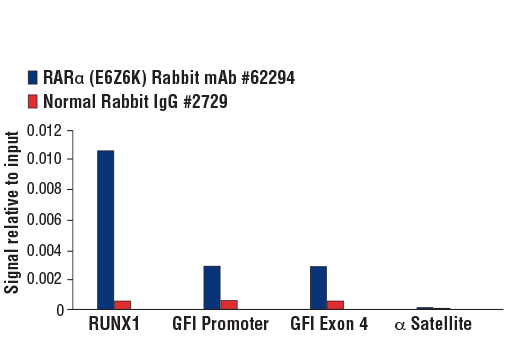 Chromatin immunoprecipitations were performed with cross-linked chromatin from NB-4 cells and either RARα (E6Z6K) Rabbit mAb #62294 or Normal Rabbit IgG #2729 using SimpleChIP<sup>®</sup> Plus Enzymatic Chromatin IP Kit (Magnetic Beads) #9005. The enriched DNA was quantified by real-time PCR using SimpleChIP<sup>®</sup> Human RUNX1 Exon 2 Primers #67254, human GFI promoter primers, human GFI exon 4 primers, and SimpleChIP<sup>®</sup> Human α Satellite Repeat Primers #4486. The amount of immunoprecipitated DNA in each sample is represented as signal relative to the total amount of input chromatin, which is equivalent to one.