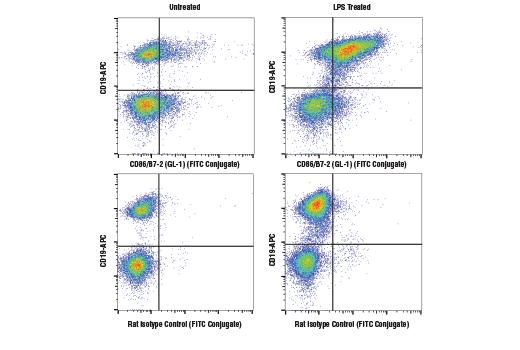 Monoclonal Antibody - CD86/B7-2 (GL-1) Rat mAb (FITC Conjugate), UniProt ID P42082, Entrez ID 12524 #99879, Cd Markers