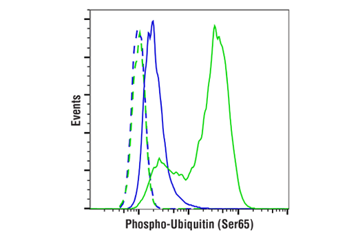 Flow cytometric analysis of PC-3 cells, untreated (blue) or treated with CCCP (30 μM, 6 hr; green), using Phospho-Ubiquitin (Ser65) (E5T1W) Rabbit mAb (solid lines) or concentration-matched Rabbit (DA1E) mAb IgG XP<sup>®</sup> Isotype Control #3900 (dashed lines). Anti-rabbit IgG (H+L), F(ab')<sub>2</sub> Fragment (Alexa Fluor<sup>®</sup> 488 Conjugate) #4412 was used as a secondary antibody.