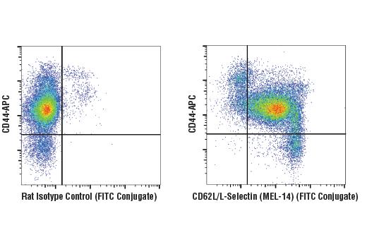 Monoclonal Antibody - CD62L/L-Selectin (MEL-14) Rat mAb (FITC Conjugate), UniProt ID P18337, Entrez ID 20343 #76378 - Immunology and Inflammation
